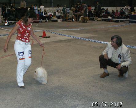 Havanský psík Rumová Pralinka z Farmy zvířat