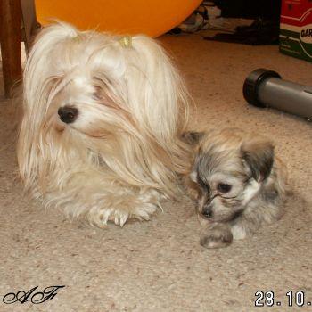 Havanský psík Lady + Amy